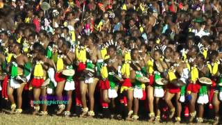 Reed Dance Ceremony  # 9  _vid-29        _(13_HD_720p)