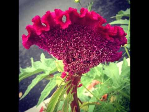 #blume #flower #nature #summer #garden #natur #flowers #love #blüte #sommer #garten #beautiful #na