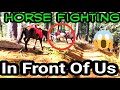 Shimla Vlog #3 Horse riding karte huye horses ki huyi fight 😱😱 | MP3