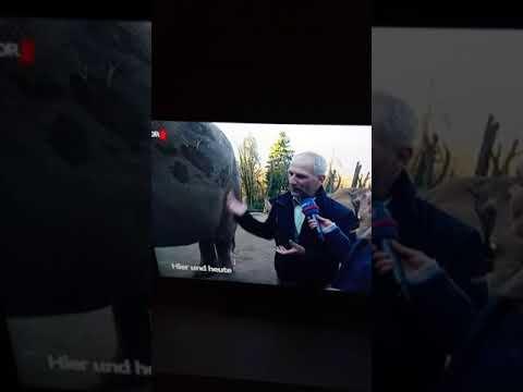 Wuppertaler Zoo Nachwuchs von der Elefant Haus
