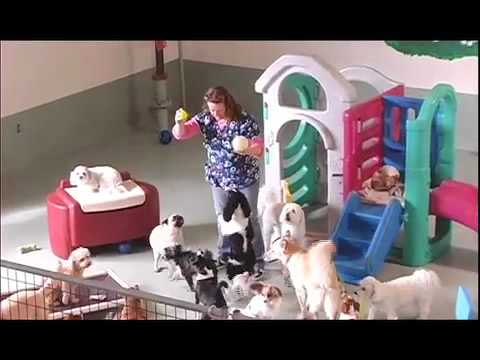 My Doggies Daycare - Voted Best Dog Daycare in OC!