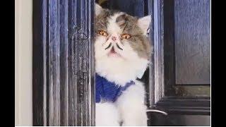Chú mèo Hài Hước . funny cat .