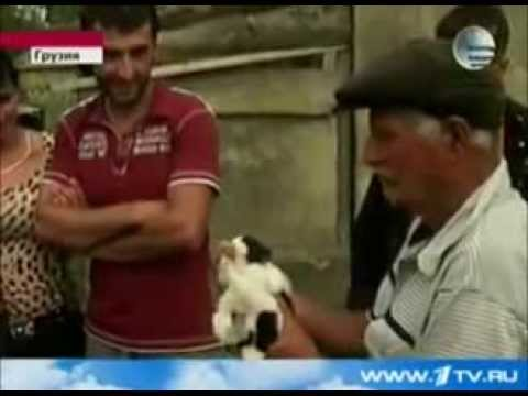 Кошка родила видео