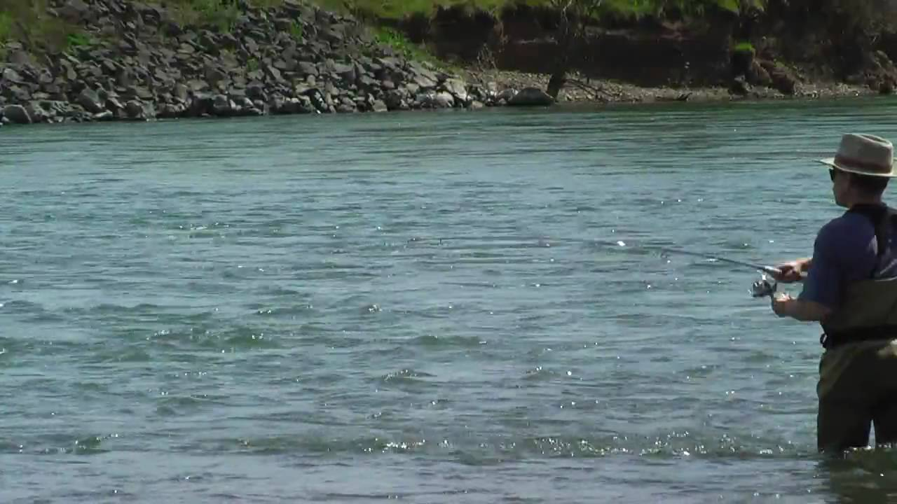 Fishing for trout at the willamette river oregon youtube for Willamette river fishing report