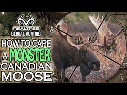 How to Cape a MONSTER Canadian Moose