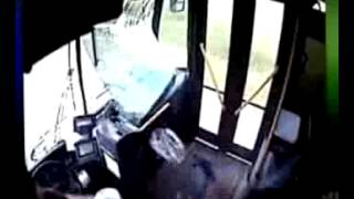 Cerbiatto sfonda vetro del Bus - Video Shock