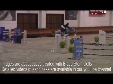 Stem Cell - Introduction to Blood Stem Cells