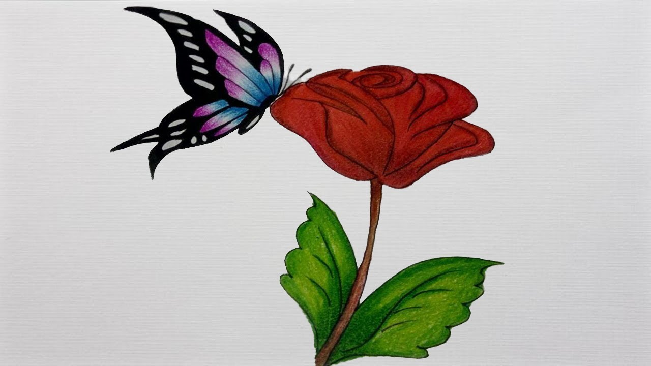 Butterfly on rose drawing