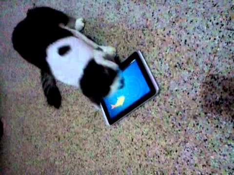 Cat playing fish game in the tablet youtube for Fish game for cats