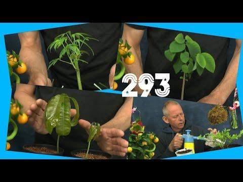 Zimmerpflanzen exotische und tropische Pflanzen im Update