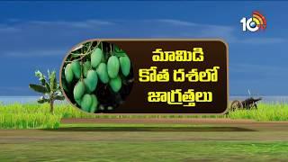 TS Horticulture Commissioner Venkatarami Reddy Suggestions for Mango Farmers | Matti Manishi