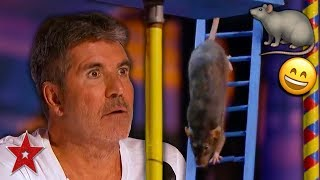 SMARTEST RAT In The World Surprises Everyone On America's Got Talent 2019! | Got Talent Global