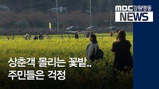 투R]꽃밭 찾는 상춘객, 주민들 코로나 걱정