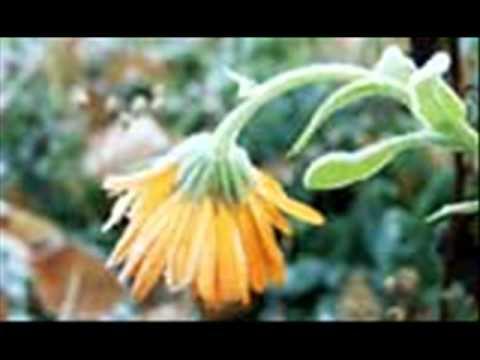 Nomadi - Il Fiore Nero