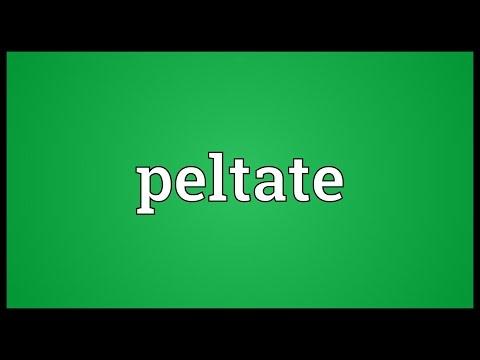 Header of peltate