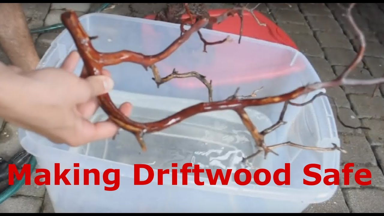 Making rocks and driftwood aquarium safe youtube for How to work with driftwood