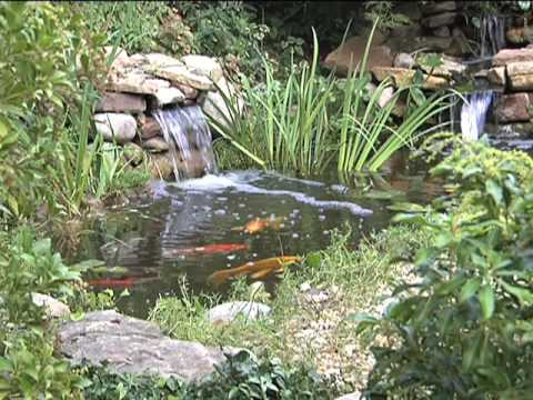 Small garden waterfalls for Small pond care