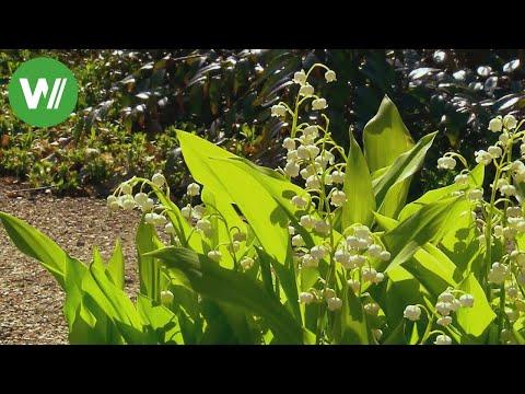 Der Garten im Mai - Stauden, Erdbeeren und Rasenpflege