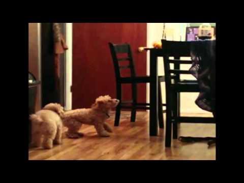 賢い犬と賢くない犬。