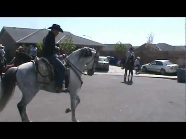 caballos hermosos bailando en mercedca amigos de Agustin Martinez