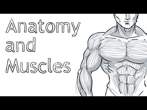 how to draw muscles easy
