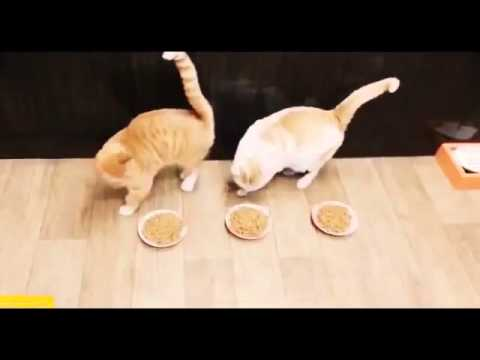 BEST 2 HOUR LONG FUNNY CAT COMPILATION   BIGGEST VIDEO Of Funny Kitty Cat Fails   Kitten Moments