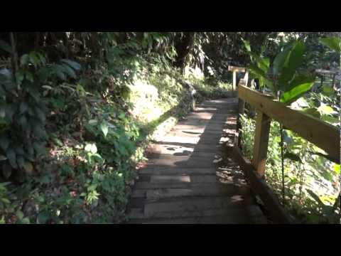 Journey to Y.S Falls, Jamaica HD