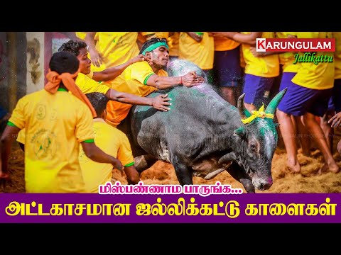 Karungulam Jallikattu @2017 -1 #1