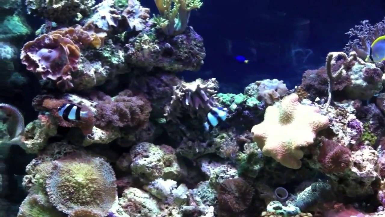 Oklahoma Aquarium In Jenks Youtube