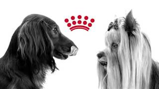 Dog Breed Nutrition: Health is unique to your dog breed