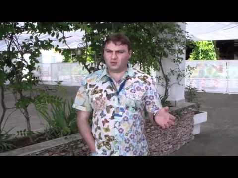 Вдребезги и Александр Плющев