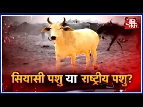 Halla Bol: A Debate On Cow Politics