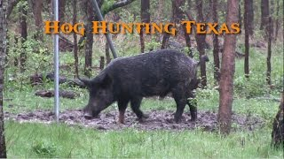 Hog Hunting Texas - Wild Boar Headshots