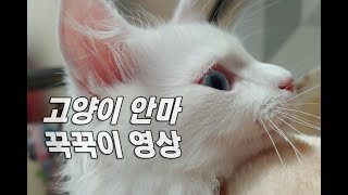 안마하는 고양이 꾹꾹이영상! 잠자면서 꾹꾹이 하는 이유는? 잠자는 사랑스런영상 근접촬영(no talking) Expression of cat affection 愛情表現をする猫