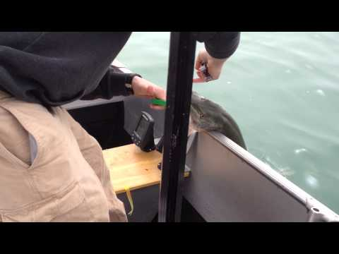 Walleye Fishing Detroit River Surprise