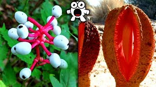 Top 20 Most Unusual Plants You Won