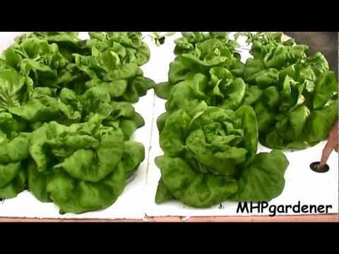Easy Hydroponics   Anybody Can Do This