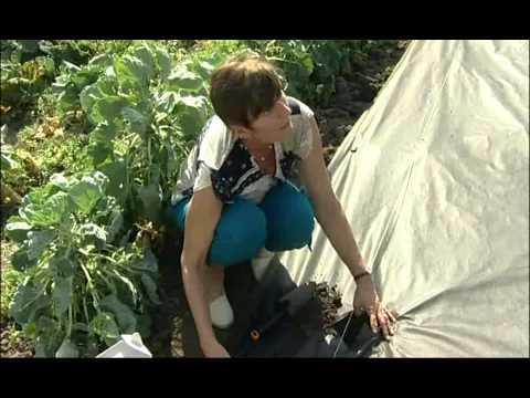 Výsadba jahodníků