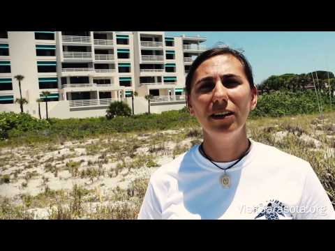 Visit Sarasota County: Turtle Nesting Season