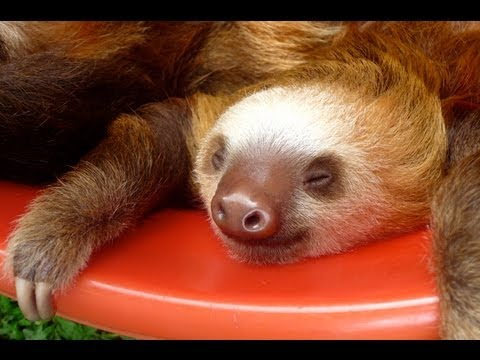 Funny Sloths & Cute Baby-Animals Compilation ❀