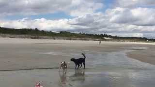 Dogs Romping at Atlantic Beach, FL