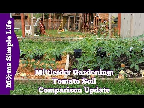 Mittleider Gardening: Tomato Soil Comparison Update