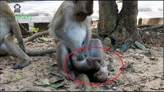 OMG Why kidnapper do bad like this on baby monkey? Pity Baby scream all day long, baby has no food