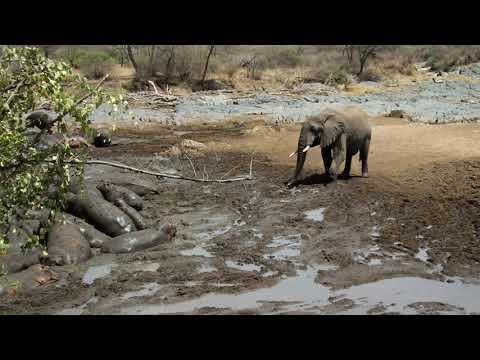 Elefant am Hippopool