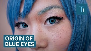 All blue-eyed people have a single ancestor in common