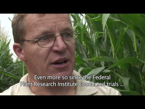 GM crop containment in the EU, part 4 the GM farmer