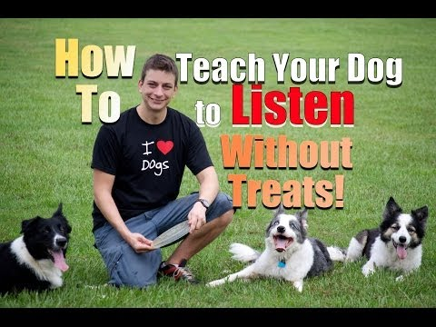 How To Get Your Dog To Listen Without Treats video