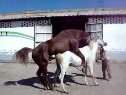 Çiftleşme Hayvanlar  Koca sol Bu Kız Köpek ile oynuyor