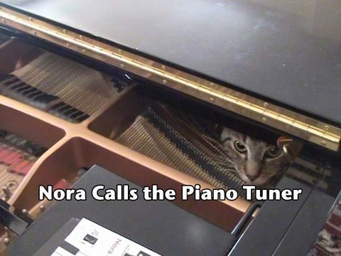 Nora Calls The Piano Tuner (www.ravenswingstudio.com)