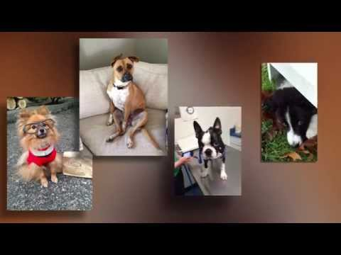 Keep Your Dog Safe From These 3 Scams